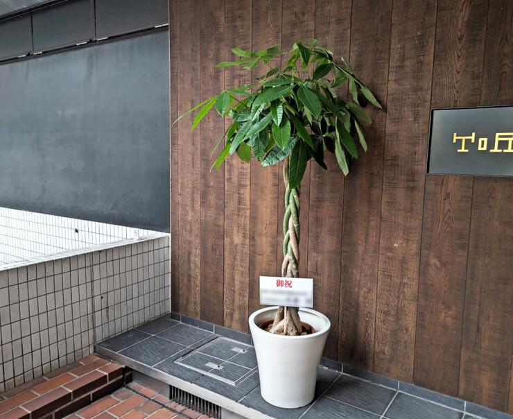 株式会社ブレインコンサルティングオフィス様の移転祝い観葉植物 パキラ @千代田区神田駿河台